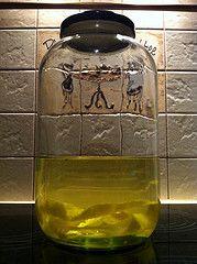 Cytrynowka (kwiecien 2012) Water Bottle, Jar, Drinks, Decor, Drinking, Beverages, Decoration, Water Bottles, Drink