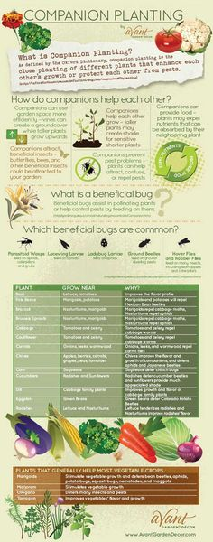Companion Planting Guide 1 - Click to Enlarge