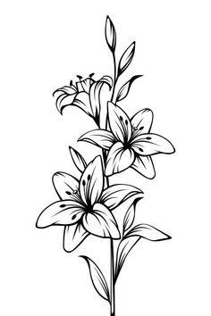 Easy Flower Drawings, Pencil Drawings Of Flowers, Flower Sketches, Drawing Flowers, Lilly Flower Drawing, Flowers To Draw, Silk Flowers, Beautiful Flower Drawings, Lilies Flowers