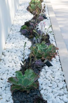 Front House Landscaping, Landscaping Around Trees, Landscaping With Rocks, Modern Landscaping, Outdoor Landscaping, Outdoor Gardens, Landscaping Ideas, Modern Landscape Design, Garden Landscape Design