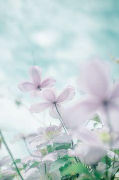flowers soft tone