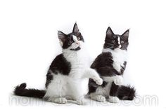 Les 16 meilleures images du tableau chat decoration cat decoration