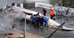 Stop Illegal Whaling in Iceland