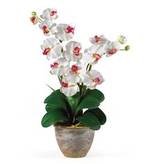 #White Double Stem Phalaenopsis Silk Orchid Arrangement.  This 25 inch double stem phalaenopsis silk orchid plant is nothing short of an explosion of color. Expertly arranged, this piece was designed to enhance any space. Each plant comes stacked with two amazing phalaenopsis stems each with 6 flowers and 2 buds. Finished with a gorgeous glazed ceramic vase this item is not to be missed. #orchid #silkflowers