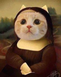 Trendy Ideas Funny Cats And Dogs Gatos Cute Cats And Kittens, I Love Cats, Cool Cats, Kittens Cutest, Kitty Cats, Cute Funny Animals, Cute Baby Animals, Cute Cat Memes, Pet Memes