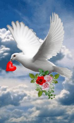 The perfect Corazón Paloma Mensajera Animated GIF for your conversation. Discover and Share the best GIFs on Tenor. Dove Images, Dove Pictures, Jesus Pictures, Gif Pictures, Beautiful Love Pictures, Romantic Pictures, Beautiful Gif, Beautiful Birds, Beautiful Rose Flowers