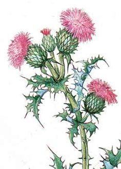 Thistle Flower of Scotland Journal 128643 - Shopping cart