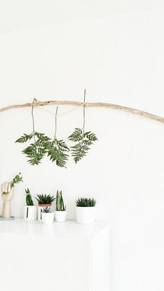 Minimal Interior Decoration With Plants And Succulents