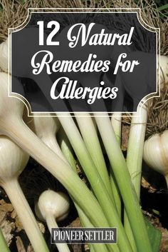 Natural Remedies for Allergies | DIY Natural Relief For Allergy by Pioneer Settler at http://pioneersettler.com/natural-remedies-allergies/