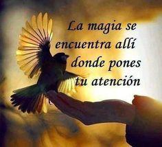 La magia es...