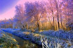 Free Forest HD Desktop Wallpapers HQ Wallpapers - Free Wallpapers Free HQ Wallpaper - HD Wallpaper PC