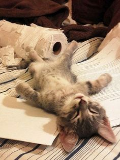 Afgepeigerde kitten