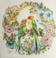 Magical Jungle by Johanna Basford; Coloured by Morena Vajak. #magicaljungle #johannabasford