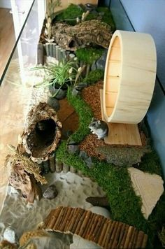 Hamster – nice picture I need this! To those who think so, it's not spoiled, it's natural but predator-free. Perfect mouse/gerbil/hamster home. The moss looks wonderful. Big nice hamster home. Teddy Hamster, Hamster Diy Cage, Gerbil Cages, Hamster Life, Hamster Stuff, Fancy Hamster, Dwarf Hamster Toys, Hamster Tank, Bear Hamster