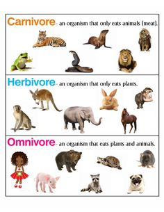 Herbivore Carnivore Omnivore, Carnivorous Animals, Iron Man Drawing, Animal Meanings, Animal Classification, Animal Worksheets, Animal Adaptations, Teaching Themes, English Worksheets For Kids