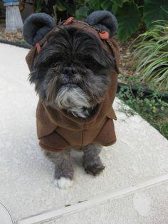 Cutest. Wookie. EVER!