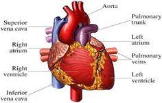 Thyroid Problems Linked To Cardiac Arrest Deaths