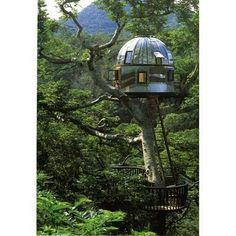 Futuristic tree house