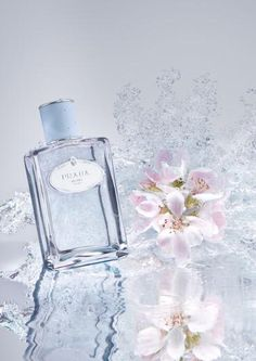 Les Infusions de Prada ~ Infusion d'Amande consists of bitter almond, heliotrope, tonka beans, musk and essence of anise.