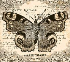 Wall Mural vintage butterfly - butterfly • PIXERSIZE.com