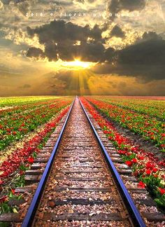 Rail Road  - Romania