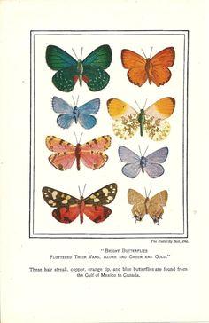 Bright Butterflies .. 1929 Antique Book Plate Wall Art