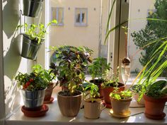 apartamento-sustentavel-horta-vertical-ecoatitude-iluminacao-janela-porto-freire-engenharia-imovel-apartamento-fortaleza.jpg (1024×768)