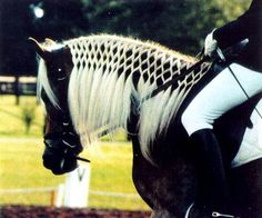 I'm not a *Huge* fan of the dressage, I'd rather to western stuff, but that mane is beautiful. MUST learn how to do this! Anybody have any tips on how to do this?