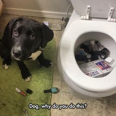 Funny Pictures Of The Day - 91 Pics :)