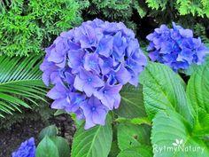 Dream Garden, Home And Garden, Flora, Vegetables, Gardening, Tin Cans, Garten, Vegetable Recipes, Lawn And Garden