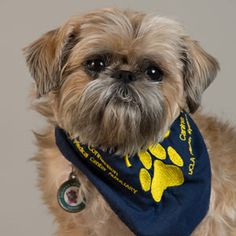 Meet Ketzel - UCLA PAC Volunteer. His greatest accomplishment is being a Complex Pet Partner, and an American Kennel Club Canine Good Citizen.