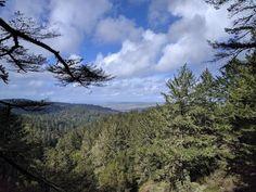 point reyes national seashore - sky trail [oc] [4032x3024]