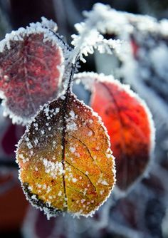 An amazing Autumn/winter shot here, the frost I find really defines the leaves and makes it what it is :) Popular Photography, Winter Photography, Nature Photography, Levitation Photography, Exposure Photography, Abstract Photography, Beach Photography, Photography Magazine, Wedding Photography