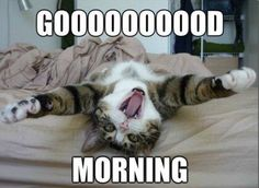 Good morning! It's a beautiful day to think about adding a furry friend to your family. www.spca.bc.ca/adopt