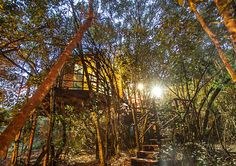 Teniqua Treetops Karatara Teniqua Treetops is a tented tree-house resort set in the lush forest along the Garden Route between Knysna and Sedgefield. These eco-friendly, hand-crafted tree houses offer a unique alternative for self-catering accommodation. Jacuzzi, Cities, Safari Holidays, Knysna, Relax, Unique Trees, Romantic Honeymoon, Luxury Camping, Parking