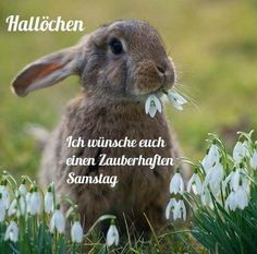Saturday GB Pics Source by uteherrnkind Easter Bunny Pictures, Beautiful Gif, Happy Easter, Easter Funny, Animals And Pets, Good Morning, Gb Bilder, Funny Humor, Austria