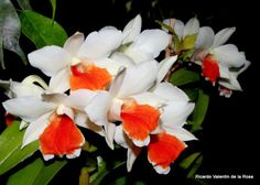 Ricardo's Blog, orchids, parrots, fish and people: February 2014