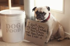 Pug shaming - My Pug was doing the same thing, only he passed out and I had to stick my finger down his throat to clear the blockage. Now after a major operation he is is better - but he still vacuums his food :(