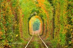 Tunelul Iubirii - Romania <3