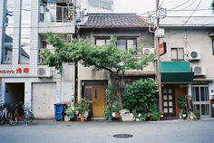 Osaka, Japan | What is the name of that big tree?