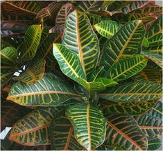 Plant Leaves, Gardening, Gift, Plants, Lawn And Garden, Gifts, Horticulture