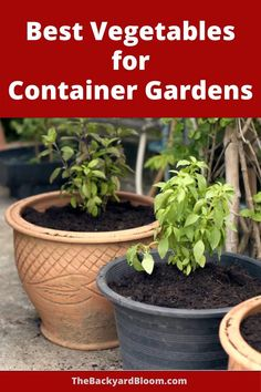 Find the best vegetables to grow in a container garden. Don't let a container garden frustrate you by growing the wrong vegetable plants. Get your patio garden going with these easy to grow vegetables for a container garden or urban garden.