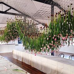 What does 1000 tulips look like upside down? by katie marx