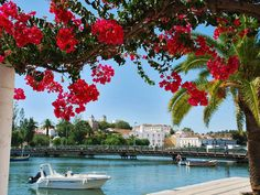 Bougainvillea, Algarve, Bali, Portugal, Beautiful Places, Earth, Mansions, House Styles, Photography