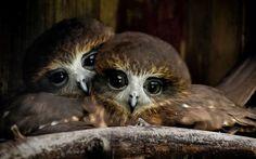 印象的な目を持つフクロウたちの画像