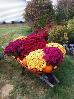 Wheelbarrow full of mums, pumpkins, and gourds in front of other blooming Fall plants. I pin things I love, this is one of them! - Gardening Take Wheelbarrow Planter, Fall Mums, Fall Containers, Fall Plants, Autumn Garden, Garden Ornaments, Fall Flowers, Blooming Flowers, Yard Landscaping