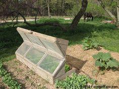 In My Kitchen Garden: Do It Yourself Kitchen Garden Inspiration: Build an Amish Cold Frame