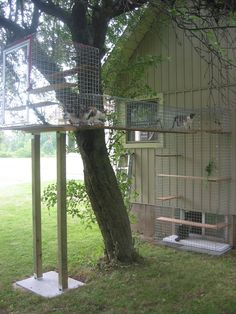 omg I want this for my cats ! This is called Home of Habitat Haven 416 466 8938 Outdoor Cat Tunnel, Outdoor Cat Run, Outdoor Cat Shelter, Outdoor Cat Enclosure, Dog Enclosures, Ontario, Cat Habitat, Cat Castle, Cat Cages
