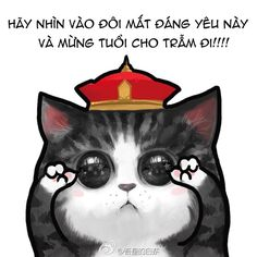 see my eye cat Neko Cat, Bff Quotes, All About Cats, Cat Memes, Cat Art, Cute Cats, Chibi, Kitten, Cute Animals