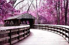 covered bridge surrounded by purple trees in Wildwood Metro Park in Toledo, Ohio Love Bridge, Old Bridges, Zen, Purple Trees, Toledo Ohio, Old Barns, Covered Bridges, Beautiful Places, Beautiful Park